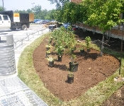 Rain Garden in Progress, Anne Arundel Community College