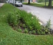 Rain Garden, Anne Arundel Community College